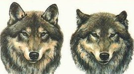 dogtalk_270x150