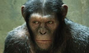 """""""Dawn Of The Planet Of The Apes"""" Casting Update"""