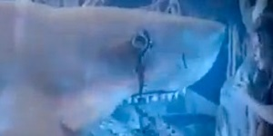 "Syfy Previews ""Ghost Shark"""