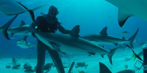 Shark Week 2014: Are You Ready?